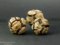 Cyprys (Cupressus sempervirens)